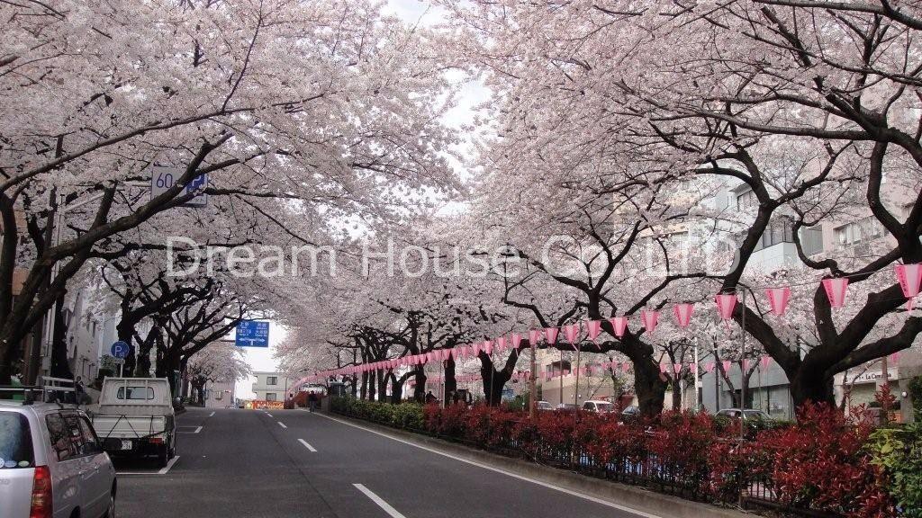 春だけじゃない。並木道で安らぐ生活を