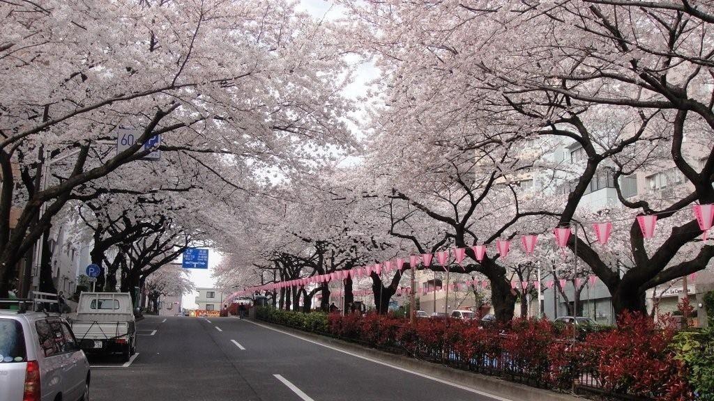 文京さくらまつり今年で47回目の開催です。