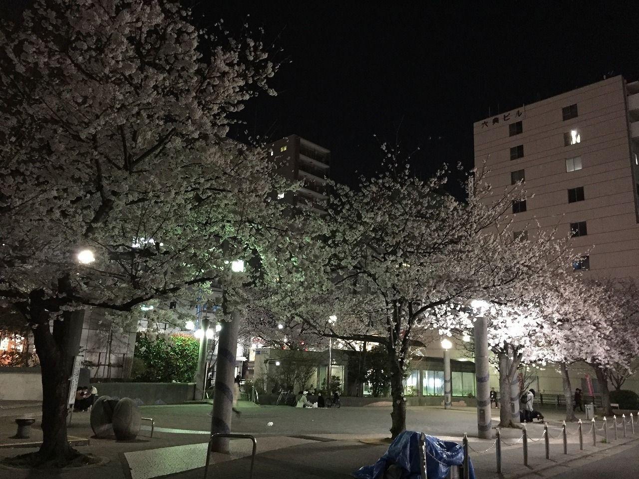 染井吉野さくら駒込駅の染井吉野桜記念公園